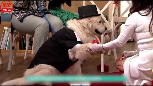 英国一女子与狗狗结婚8年 竟然声称狗比男人还靠谱-频道-手机搜狐