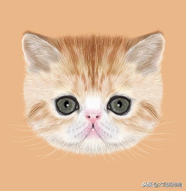 异国短毛猫_加菲猫多少钱一只_加菲猫价格_加菲猫图片 _狗铺子
