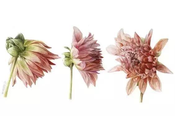 手绘植物图谱,画的真美