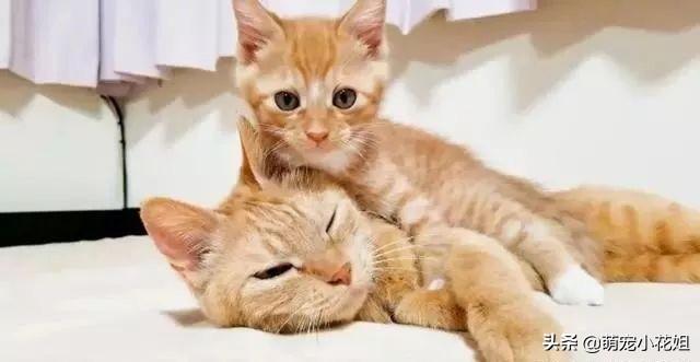 辟谣,猫咪吃掉自己的孩子并非冷血,其实另有隐情