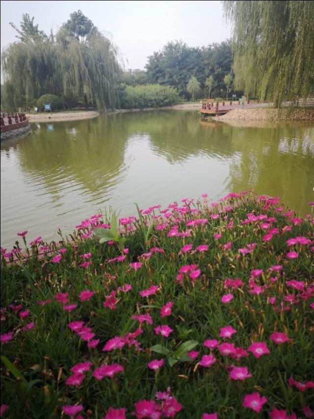 曾祥裕:小城大美 河北小县城枣强 两个人工湖 置身其中恍在江南