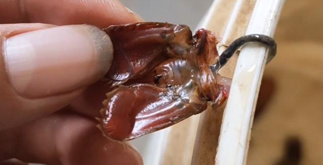 """应对龙虾""""五月瘟""""疫情,尽早做好预防措施是关键"""