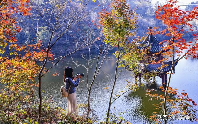秋日暖阳图片唯美图片