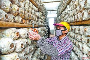 发现阳江|阳江市首个国家级文物保护单位:阳春陂面镇六村岗独石仔古人类洞穴遗址