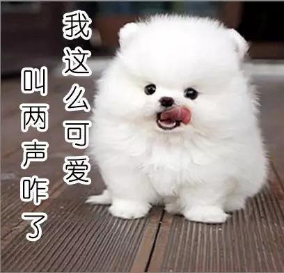 小型宠物狗种类
