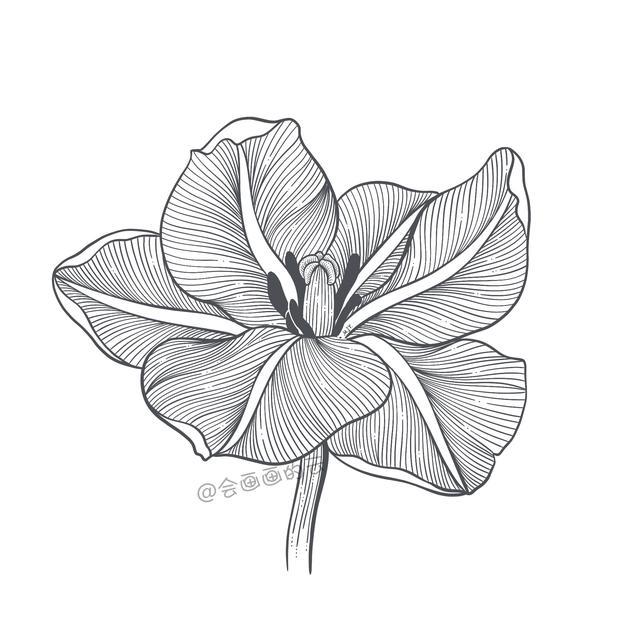 各种花朵简笔画图片大全 花的画法步骤教程◆肉丁儿童网