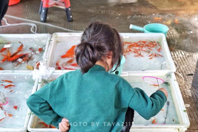 温州瓯海:这是市区唯一的花鸟鱼宠市场,即将消失——妞儿嬉游记