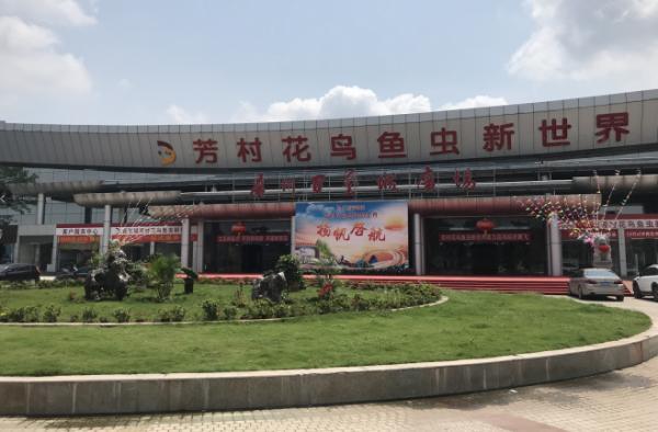 童年的回忆!广州芳村花鸟鱼虫新市场开档了,你会去逛逛吗?