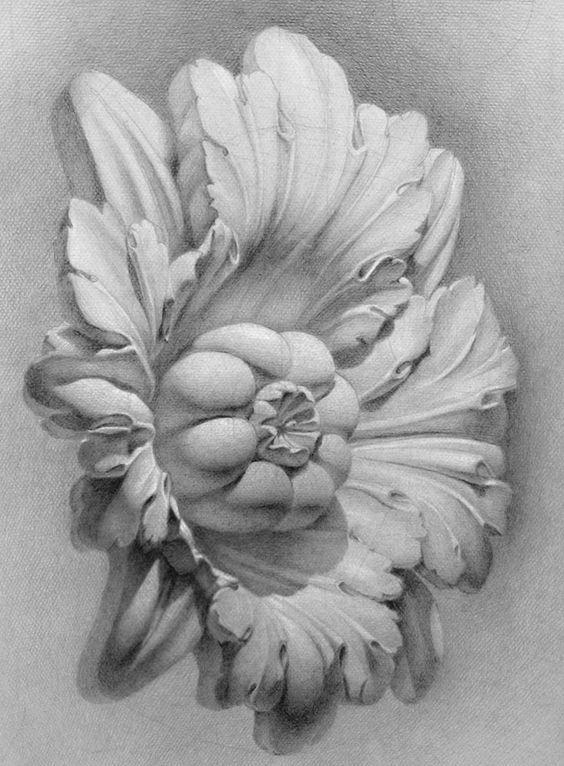 素描花朵图片简单