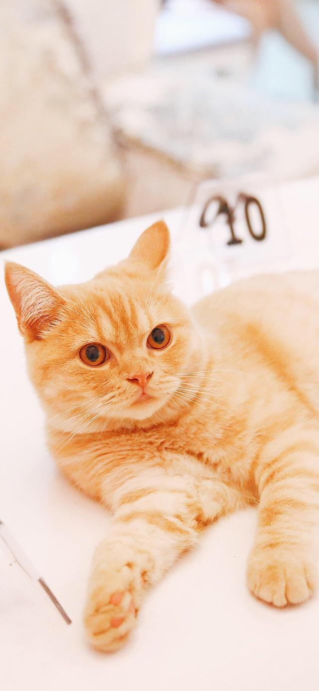小猫简笔画大全可爱