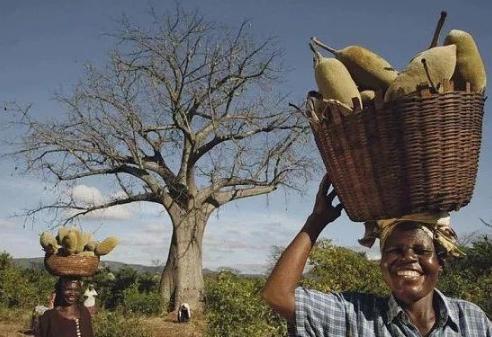 非洲夫妇在6000年树龄的树里开酒吧,最多可容纳15人,如今成这样