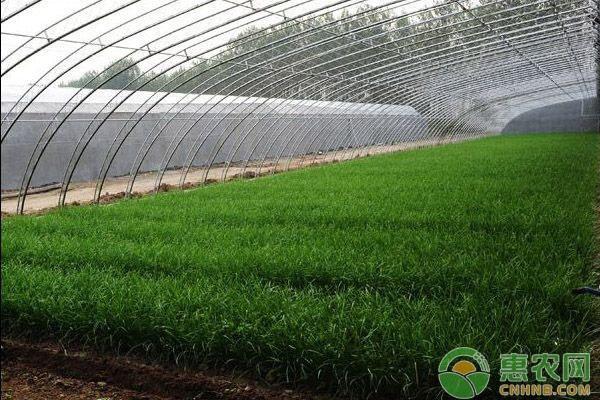 建设冬季蔬菜水果温室每亩最高补助可达3万元