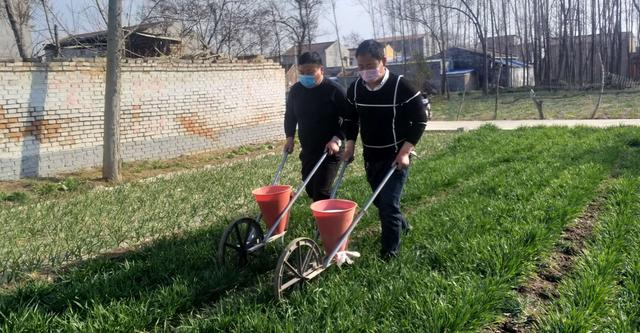 河北省赵县董庄村周边有古梨树群570亩,成片连方,蔚为壮观