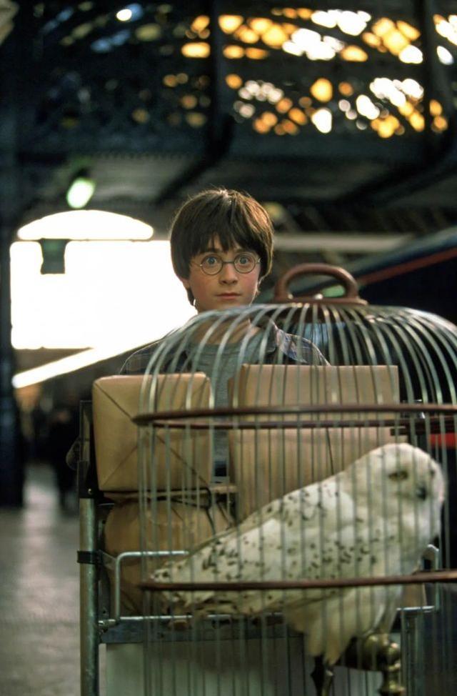 大难不死的男孩哈利·波特四十了,在冷静热情、现实魔幻中成长