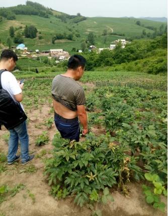 乐虎国际牡丹在吉林桦甸生根落地,经历从苗期到产籽期