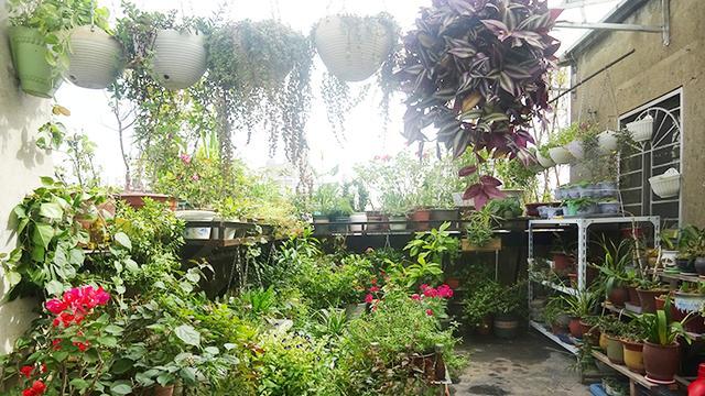 室內樓頂花園實景圖片