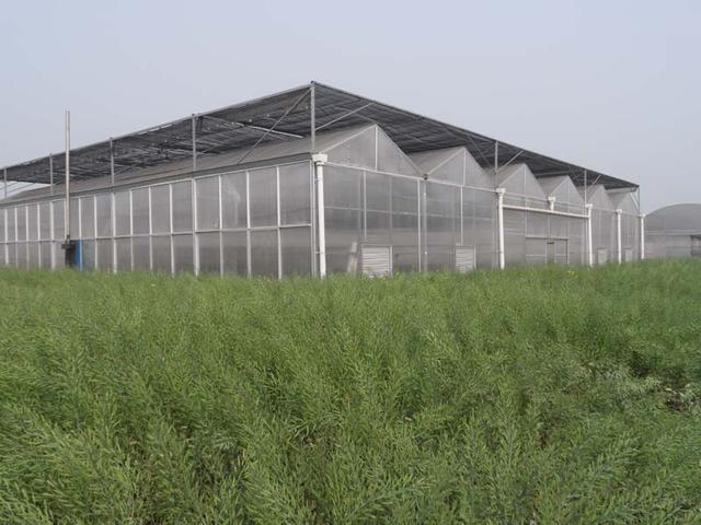 全阳光板温室一个应该不应该被遗忘的温室大棚类型