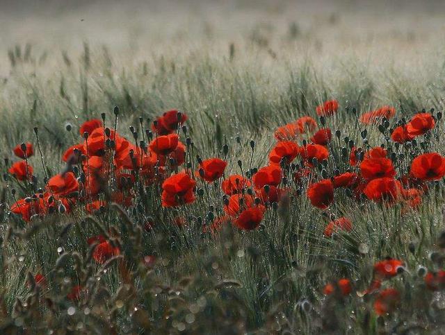 送给死人的花叫什么花
