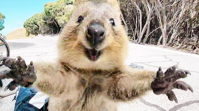 盘点全球动物灿烂笑容_新浪图片