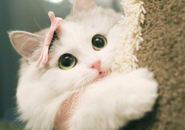 呆萌小猫图片大全可爱