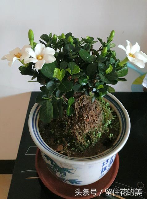 最适合室内养的10种观叶植物,水培土培随你挑!