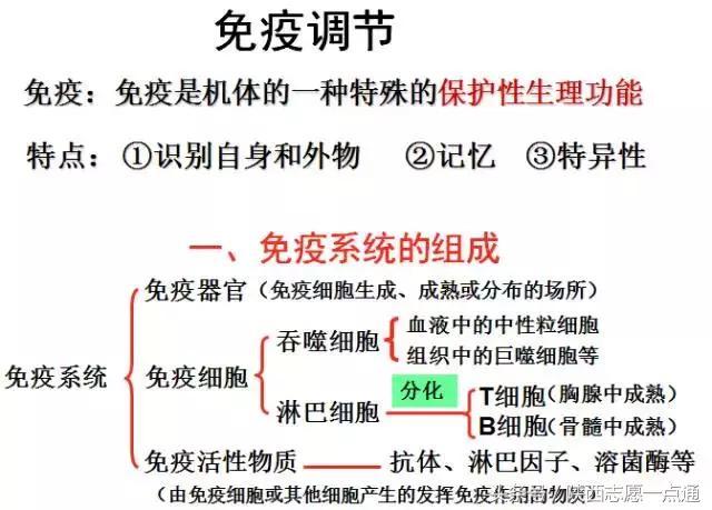 免疫调节【精选-PPT】 - 道客巴巴