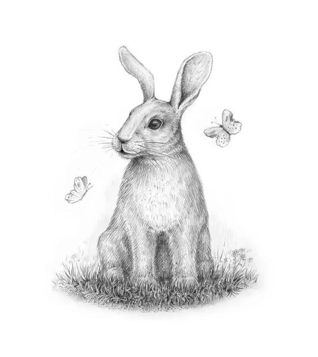 素描动物小兔子绘画步骤 - 豆丁网