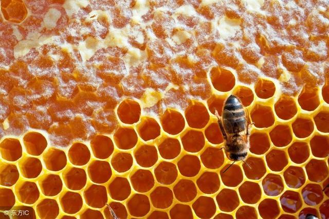 蜂蜜和花粉吃法的功效和作用_品略