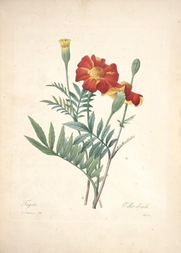 尘封百年的手绘植物图谱,博物大师的经典画作