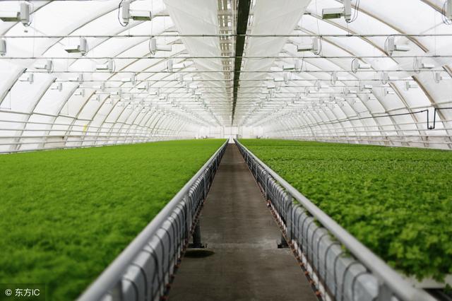 阳光板温室大棚造价详细表 想建温室大棚的快拿走