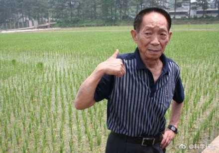 沙漠种植水稻成功 首次亩产超500公斤将造福全人类-股城热点
