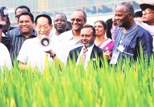 厉害了我的院士,沙漠种植水稻成功,又创造一个世界奇迹!