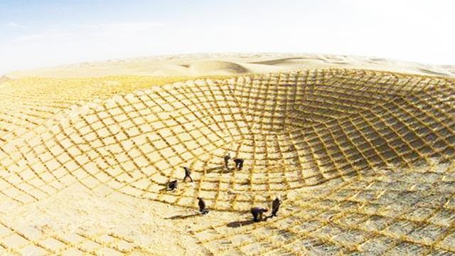 沙漠种植水稻成功 最高亩产超500公斤_中华网