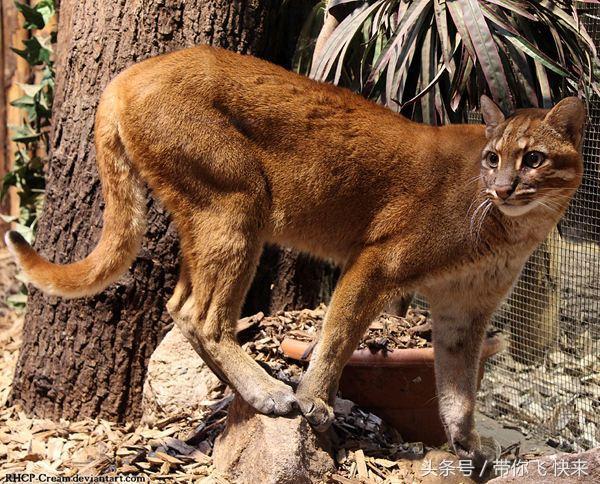 广西钦州灵山太平猫头岭奇特地形猫头地,金猫出洞富贵福禄来