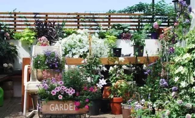 碧桂園樓頂花園圖片