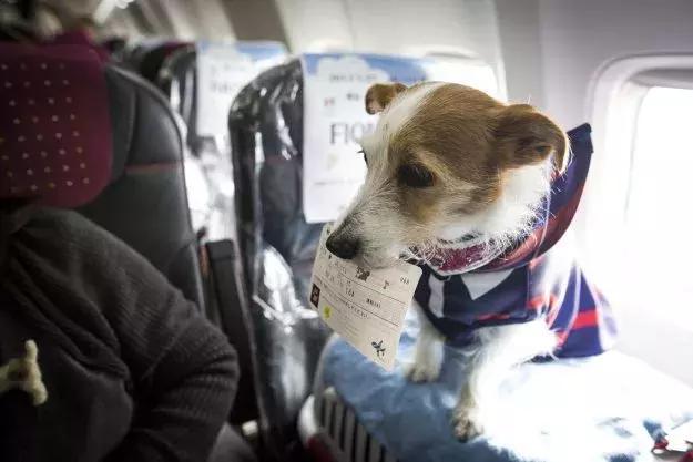 飛機座位舒適度