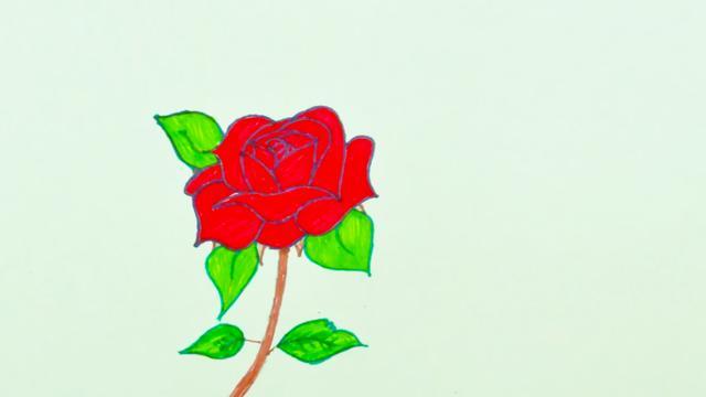 花卉简笔画教程:教你画一朵浪漫美丽的玫瑰花