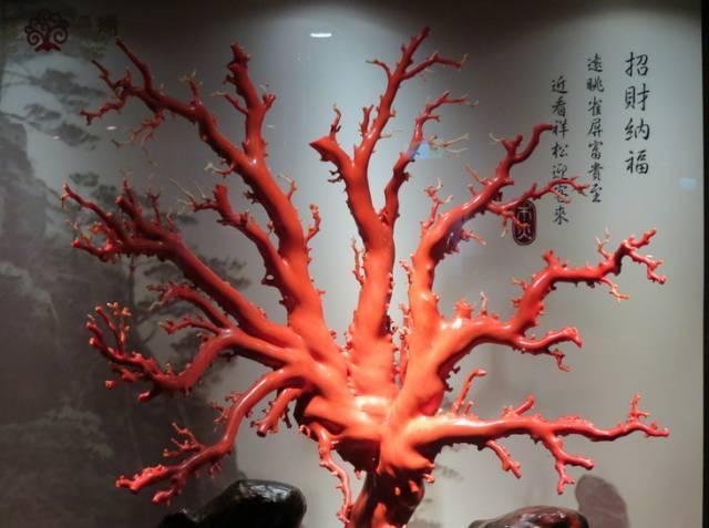 鉴定珊瑚的七大法宝!