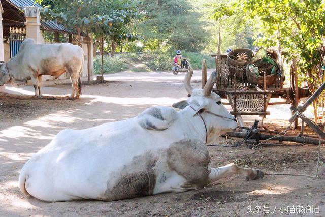 缅甸农村姑娘的生活照