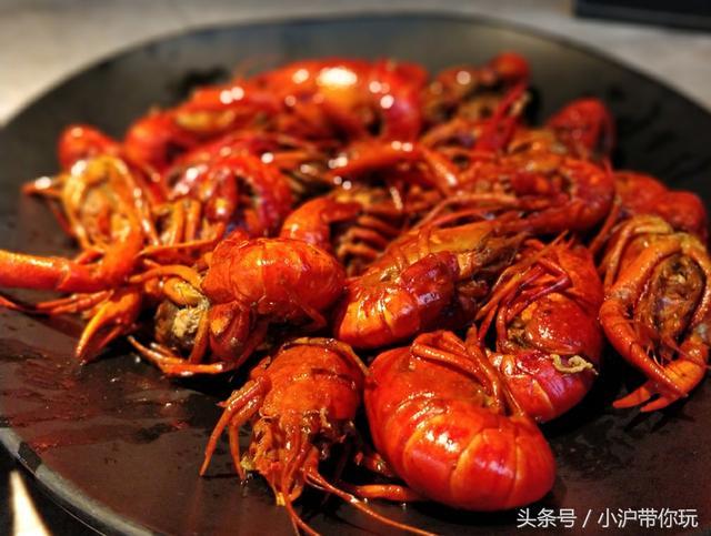 上海红盔甲小龙虾地址