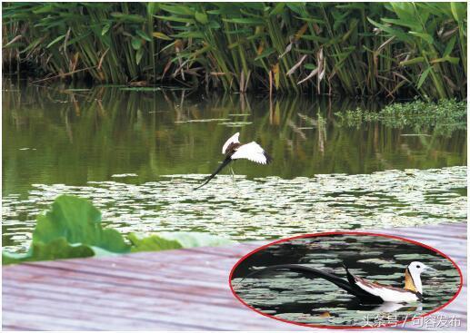 水生植物在生态湿地公园的应用浅析 - 道客巴巴