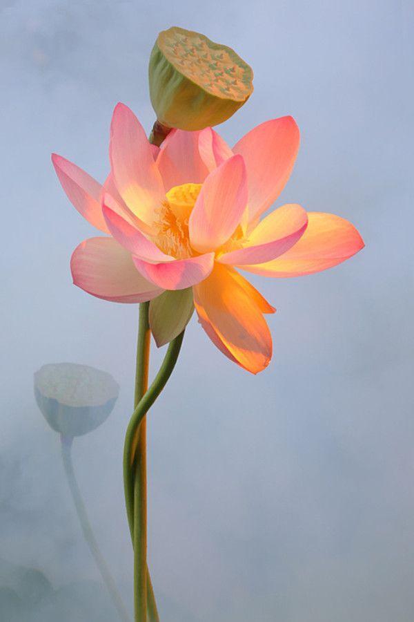 鲜艳花朵高清手机壁纸