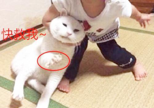猫咪情侣头像