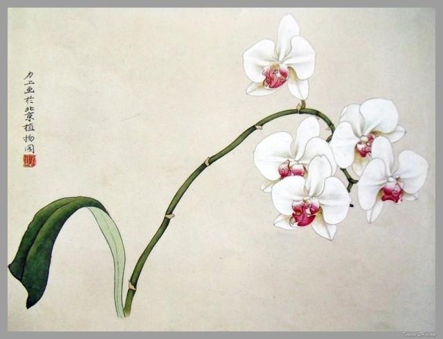 工笔国画花卉