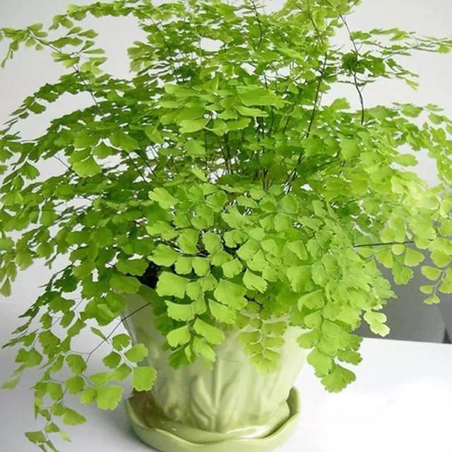 屋内长期适合种什么植物?