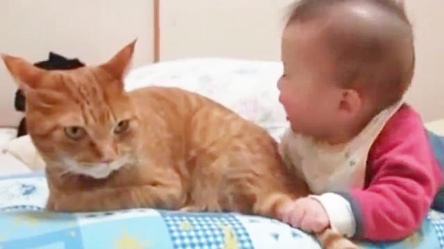 宝宝被猫咬伤
