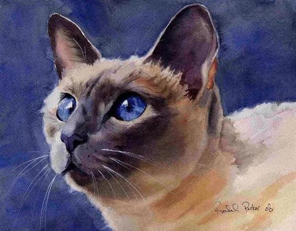 卖萌的小猫咪图片大全_猫猫图片_萌宠图片_秀宠网