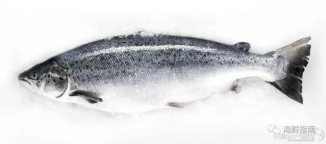 丹麦法罗群岛三文鱼的优点