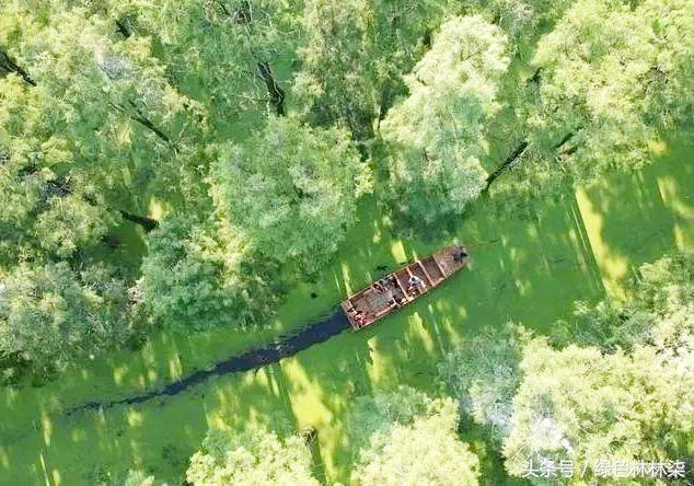 海珠湖湿地公园