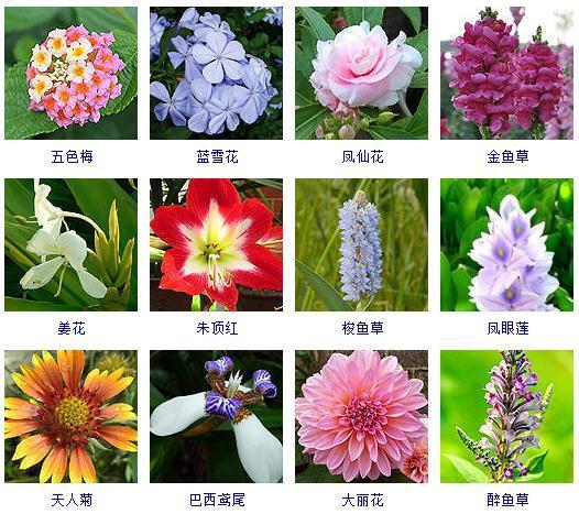 100种珍贵花卉图片